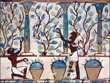 20120207-wine Maler_der_Grabkammer_des_Nebam